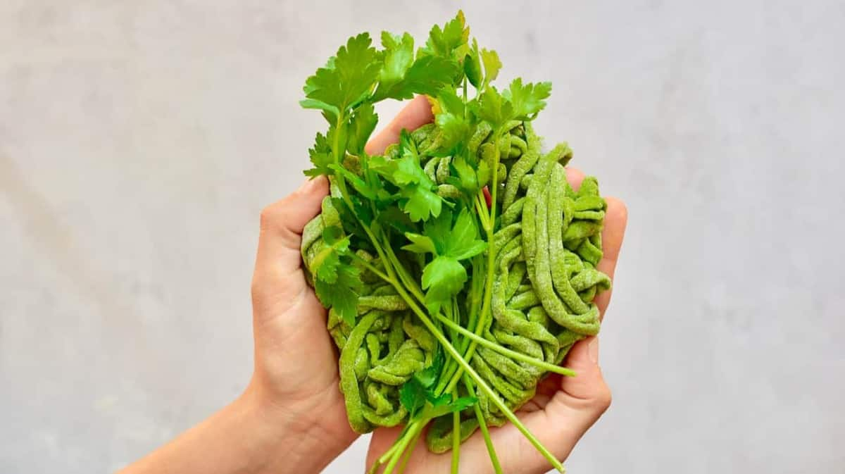Homemade green pasta strings with parsley being held in hands