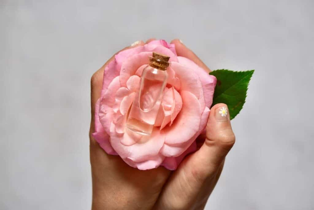 Homemade rose water in a small vial placed on rose flower being held in hands