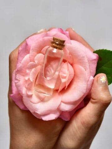 Homemade rose water in a vial placed on a rose flower being held in hands