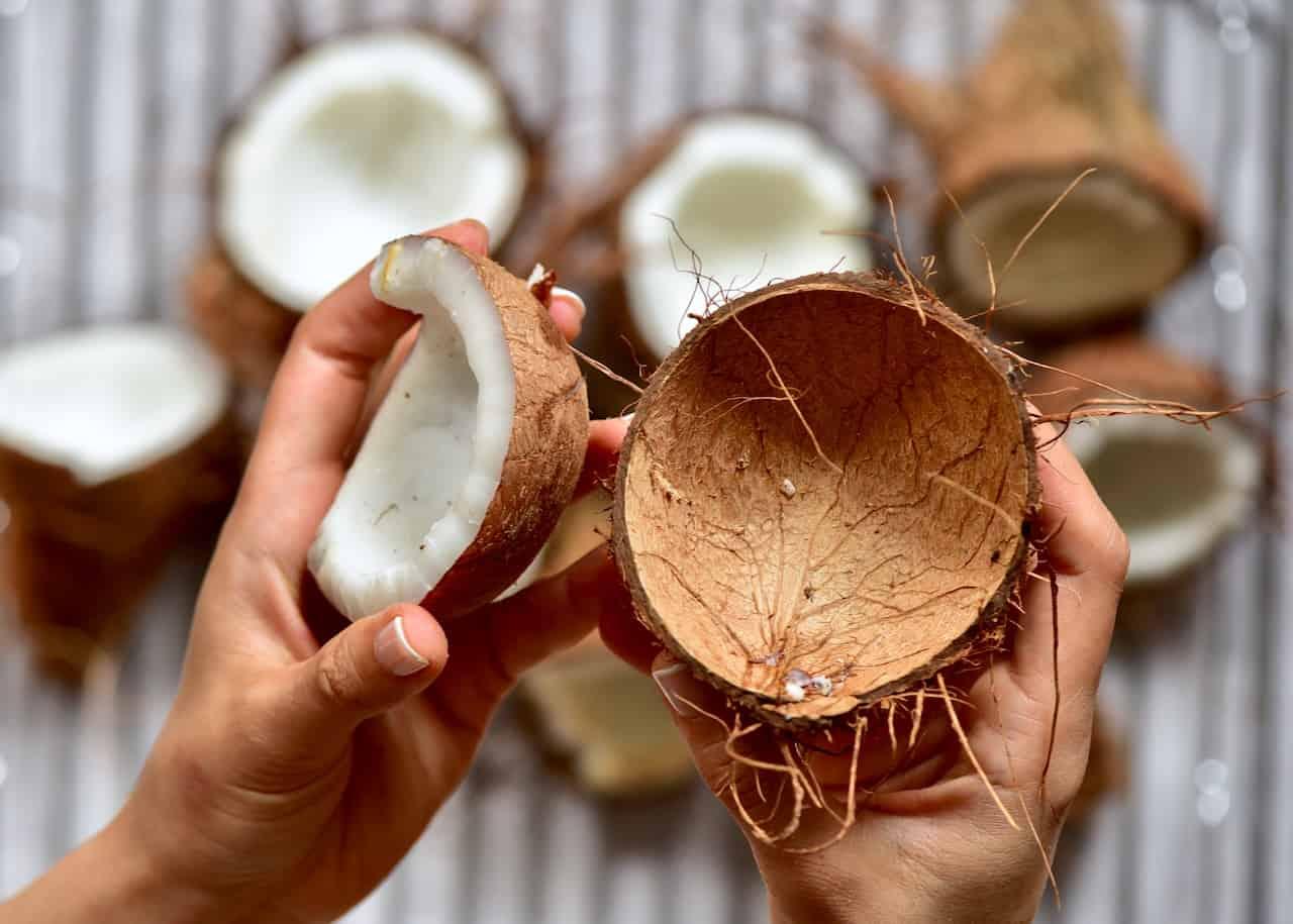 open coconuts, ready to make virgin coconut oil.