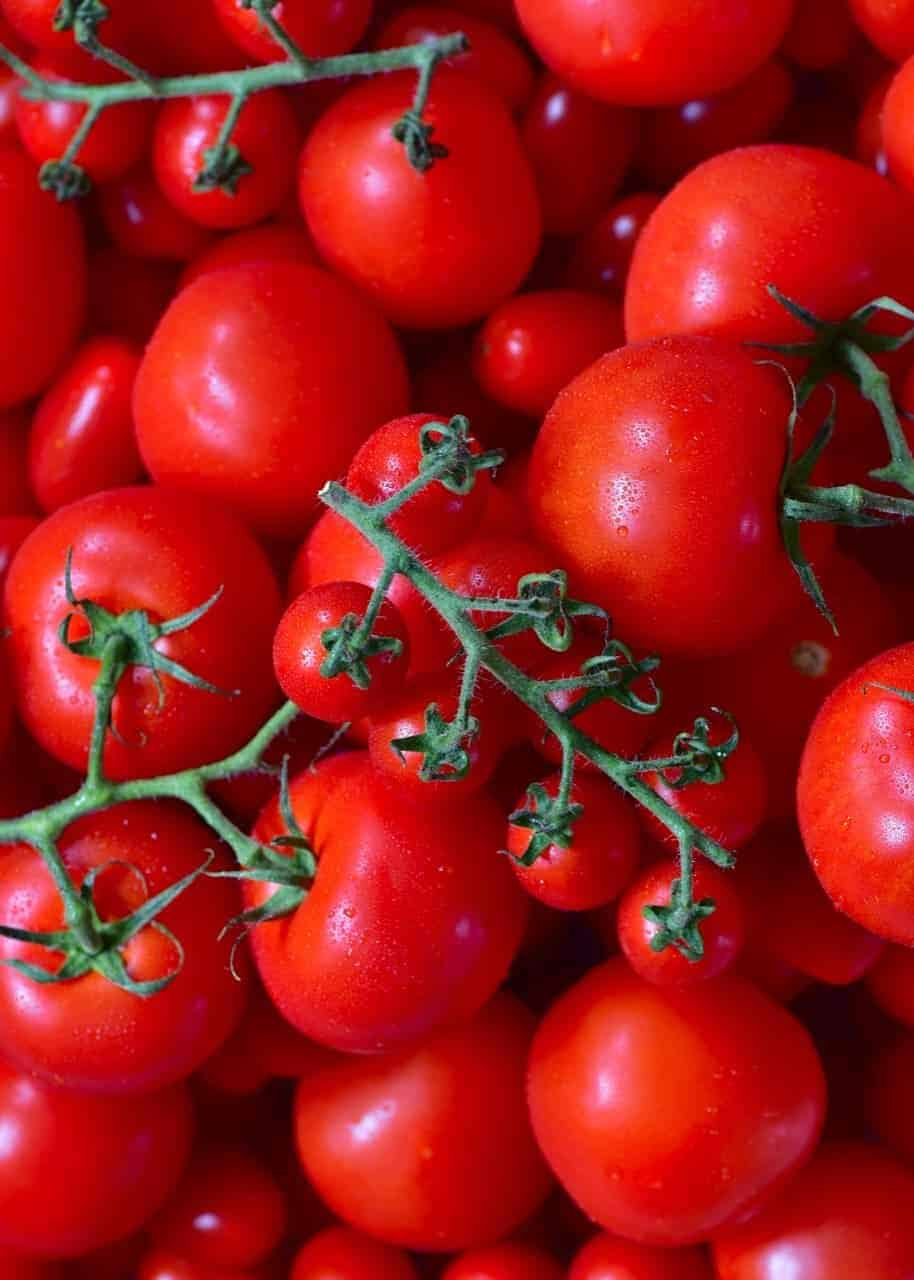 fresh red tomatoes for making homemade tomato puree/ paste