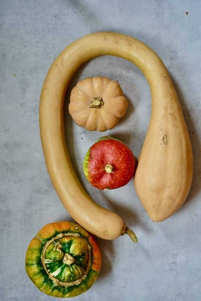 a selection of squash and pumpkin varieties