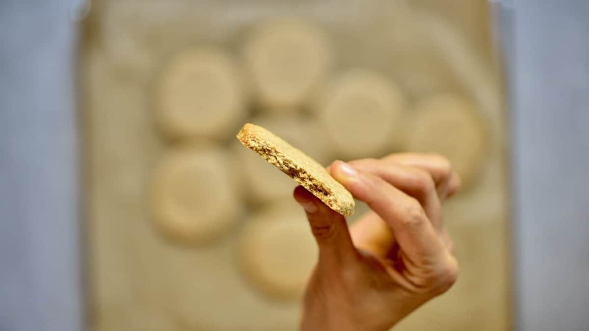 close up of digestive biscuit