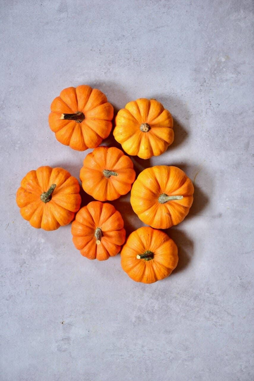mini pumpkins on a grey background