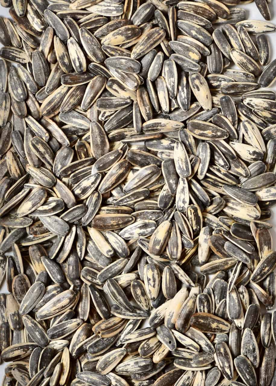 sunflower seeds in shell