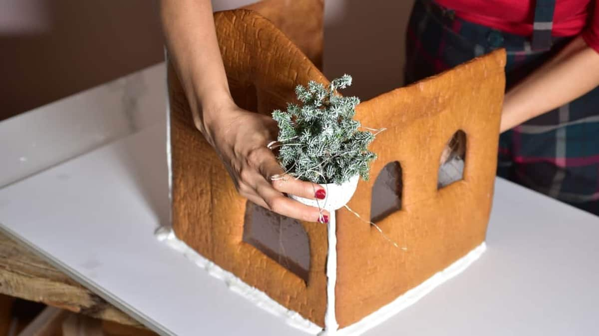 decorating gingerbread house with a small pine tree