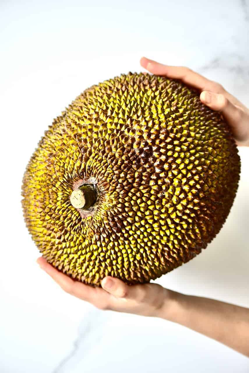 Two hands holing a jackfruit