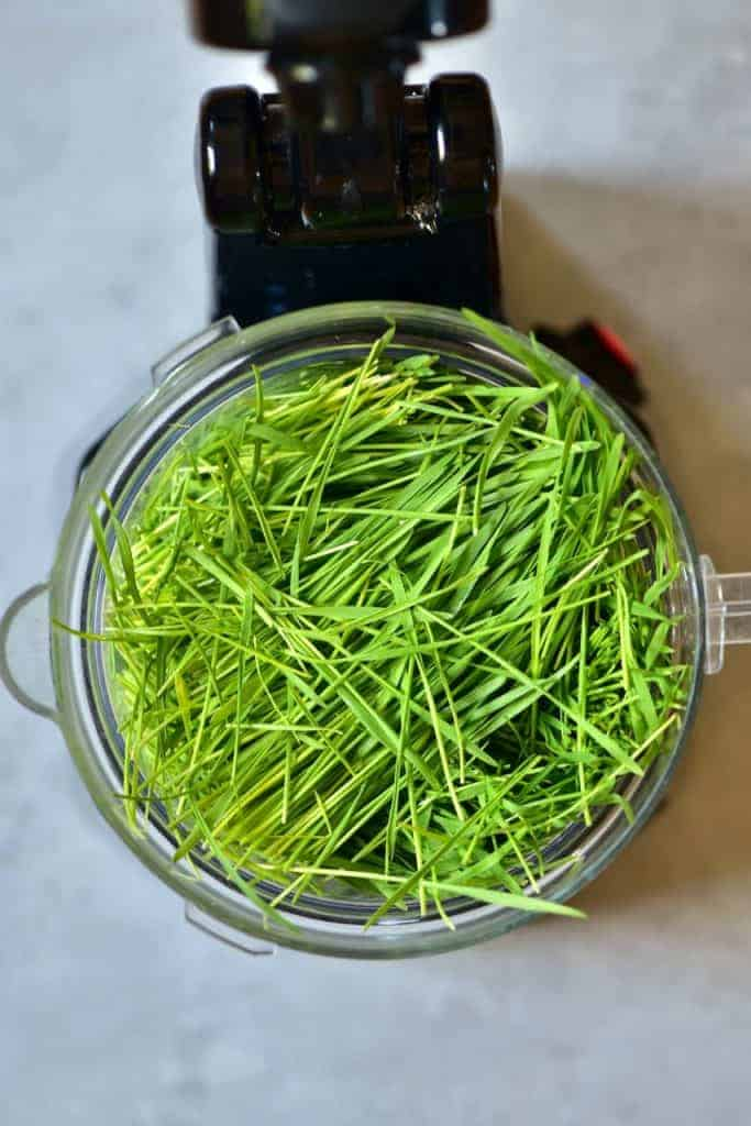 Wheatgrass in a blender