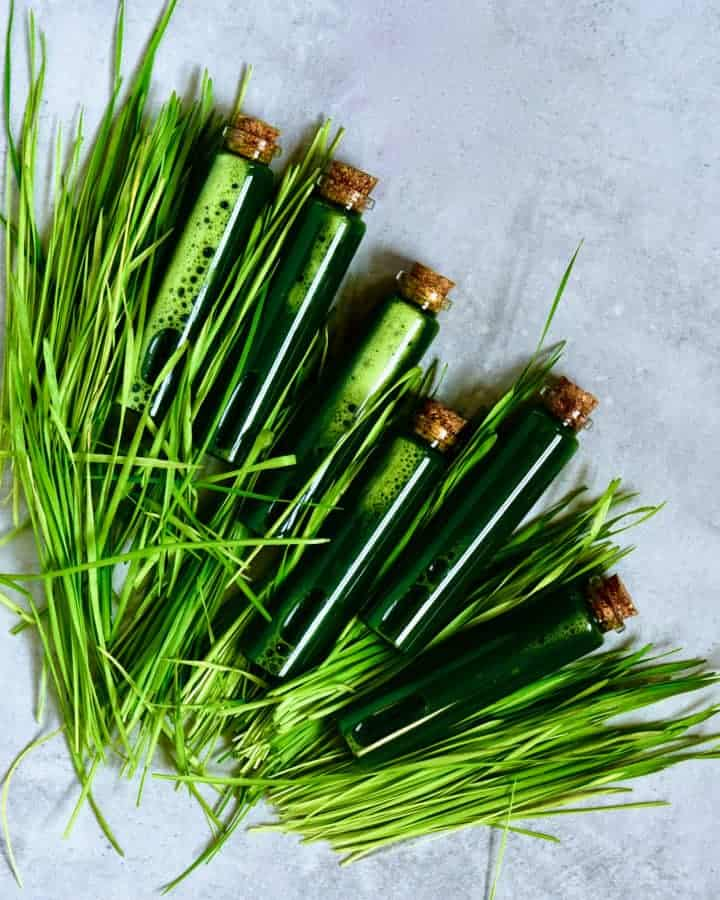 Square image of wheatgrass shots