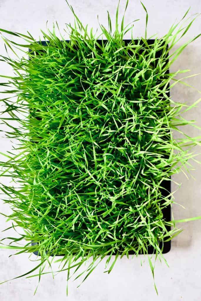 Homegrown wheatgrass