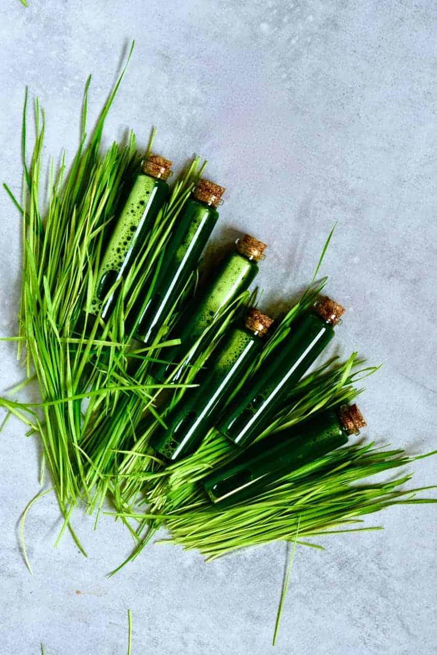 Wheatgrass shots