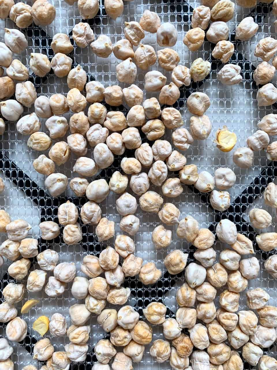 Dehydrated chickpeas