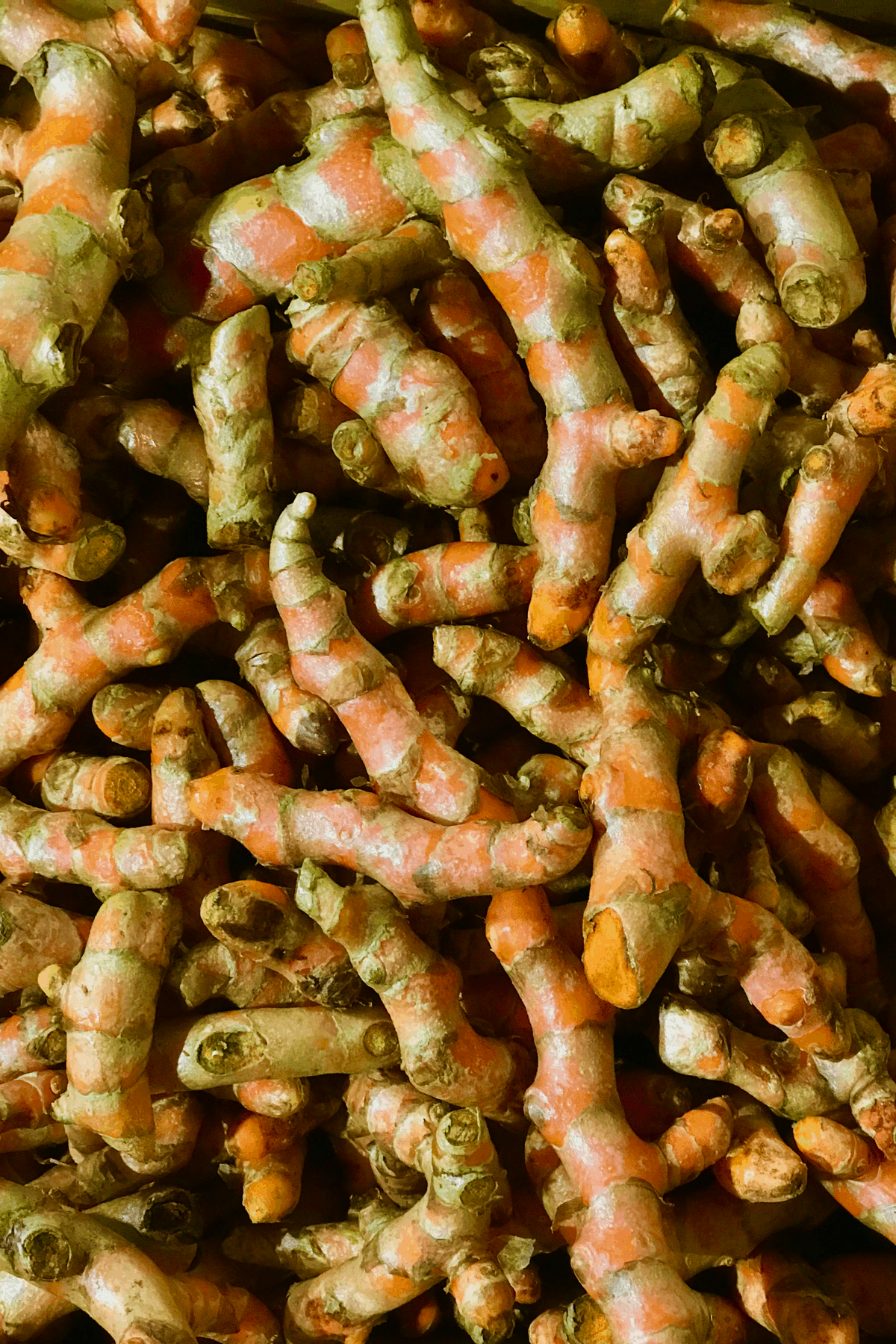 Turmeric roots pile