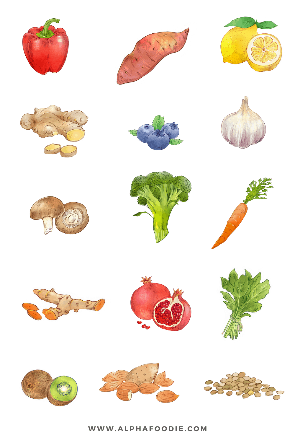 collage sketch of fifteen different immune boosting ingredients