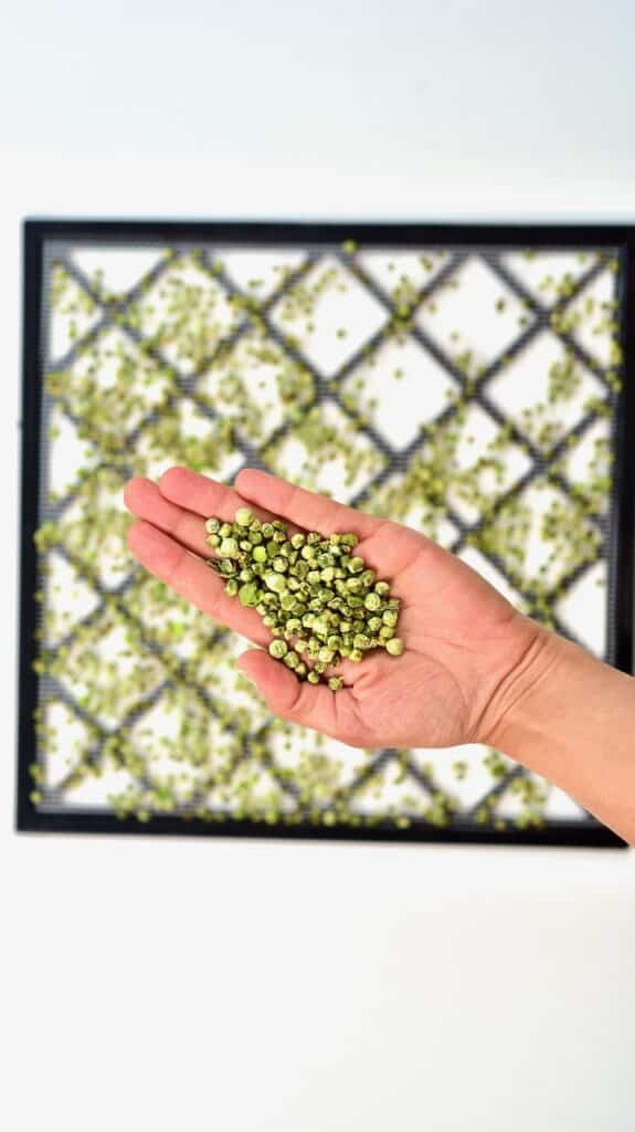 dehydrated green peas on a hand