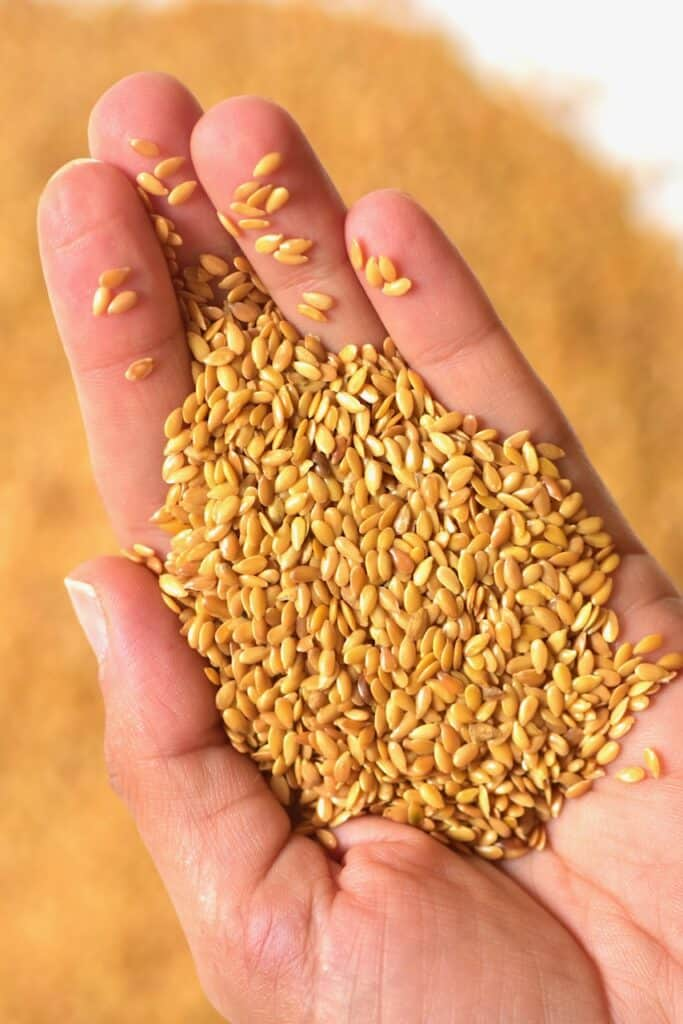 holding Golden Flaxseed in one hand