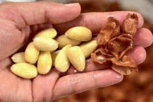 peeled almonds and almond skin on a hand