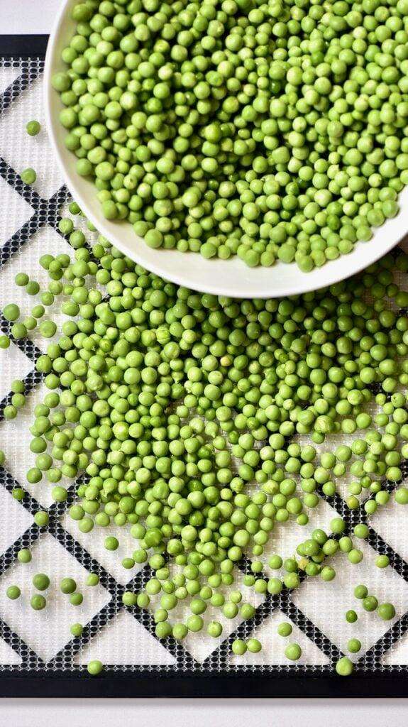 putting green peas on a dehydrator tray