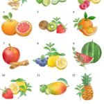 Drawings of fruit and herb combinations for flavored water