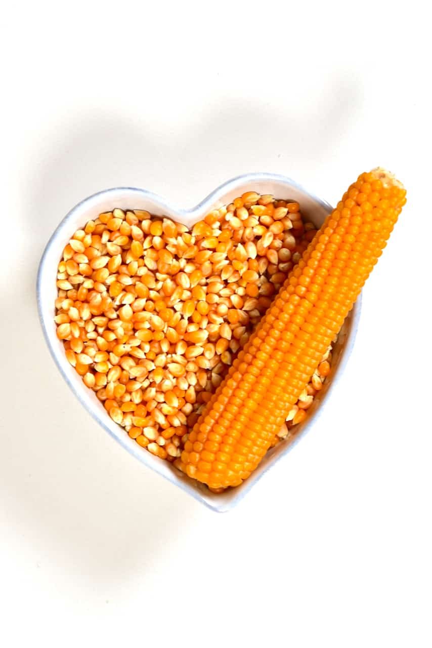 Dried corn in a bowl and a corn ear