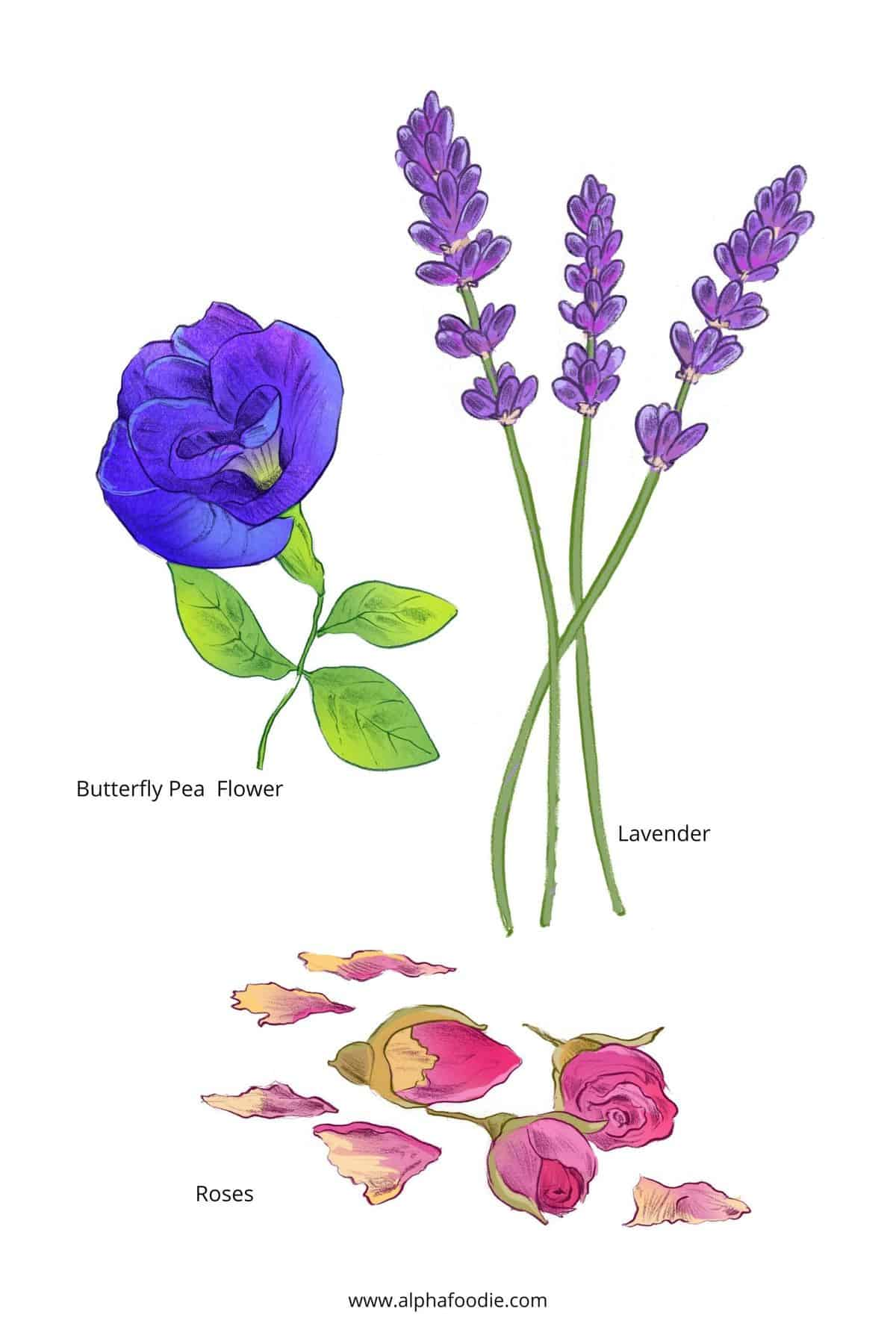Drawings of flowers to make Flavored Water