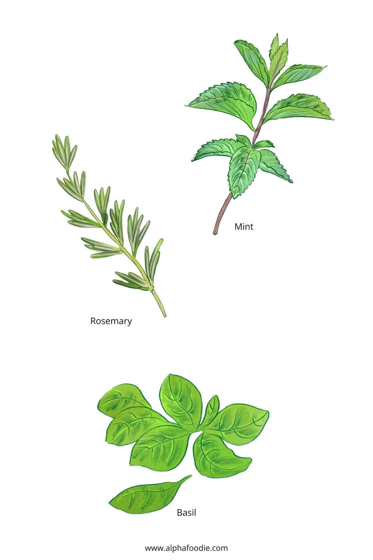 Herbs to make flavored water