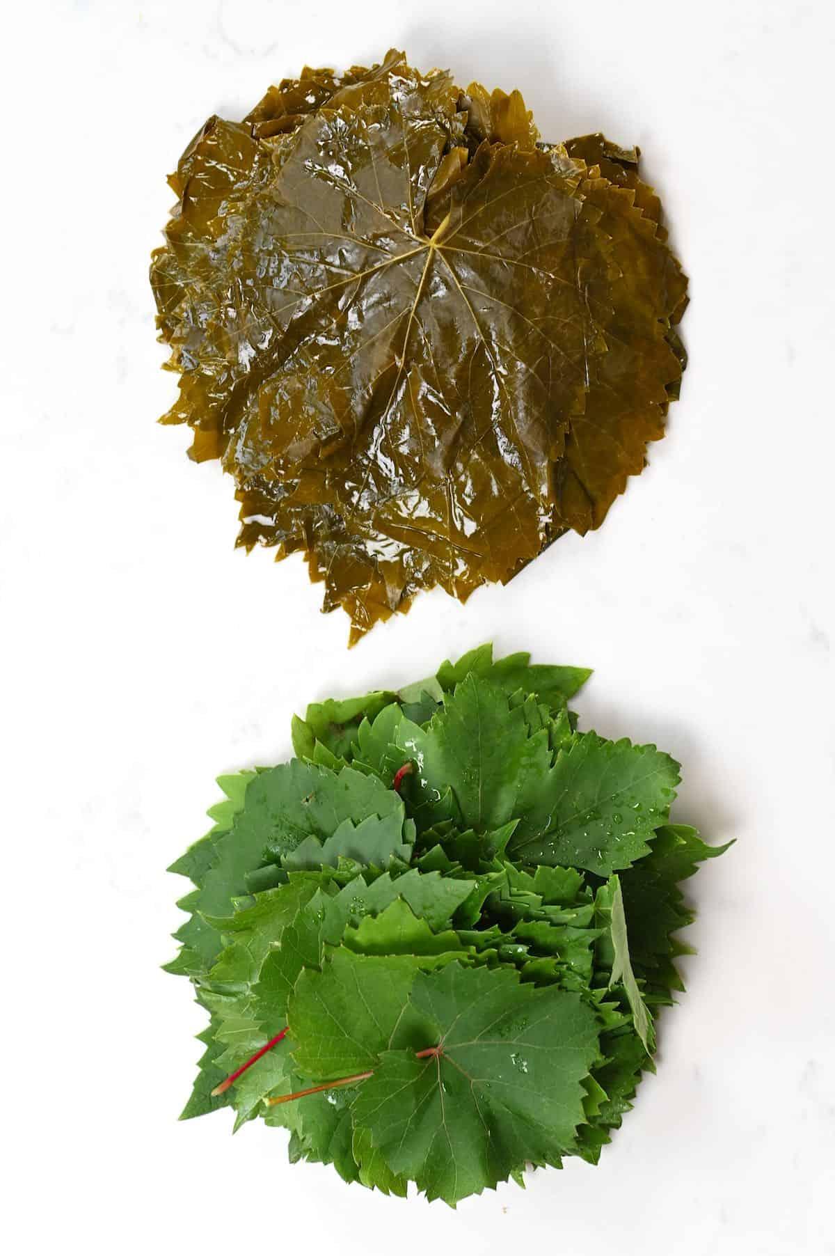 Preserved vs green vine leaves