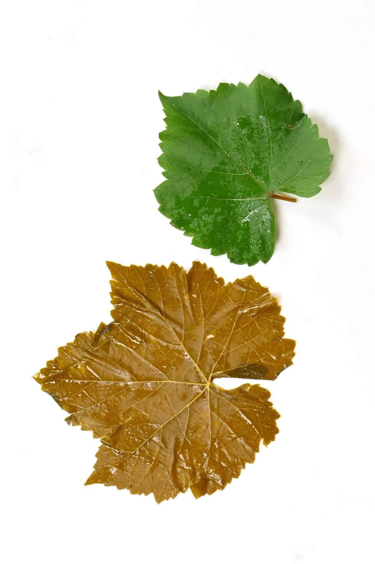 Preserved vs green Stuffed Vine Leaf
