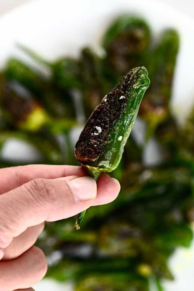 A close up of one Padron pepper