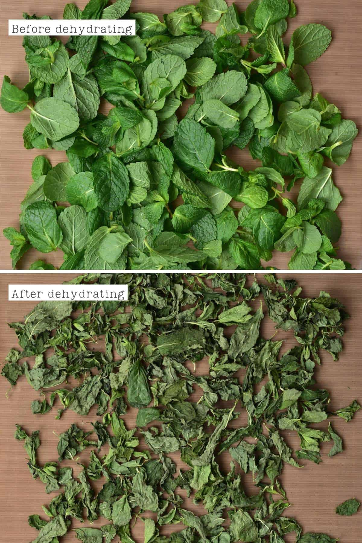 Before and after dehydrating mint leaves