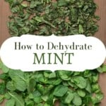 Dried mint and fresh mint on a flat surface