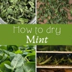 Steps for drying mint leaves