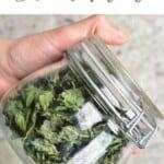 Dried mint leaves in a jar