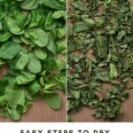 Fresh mint leaves and dried mint on a flat surface