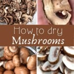 Steps to drying mushrooms