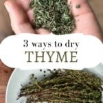 A hand holding dried thyme and fresh thyme in a colander