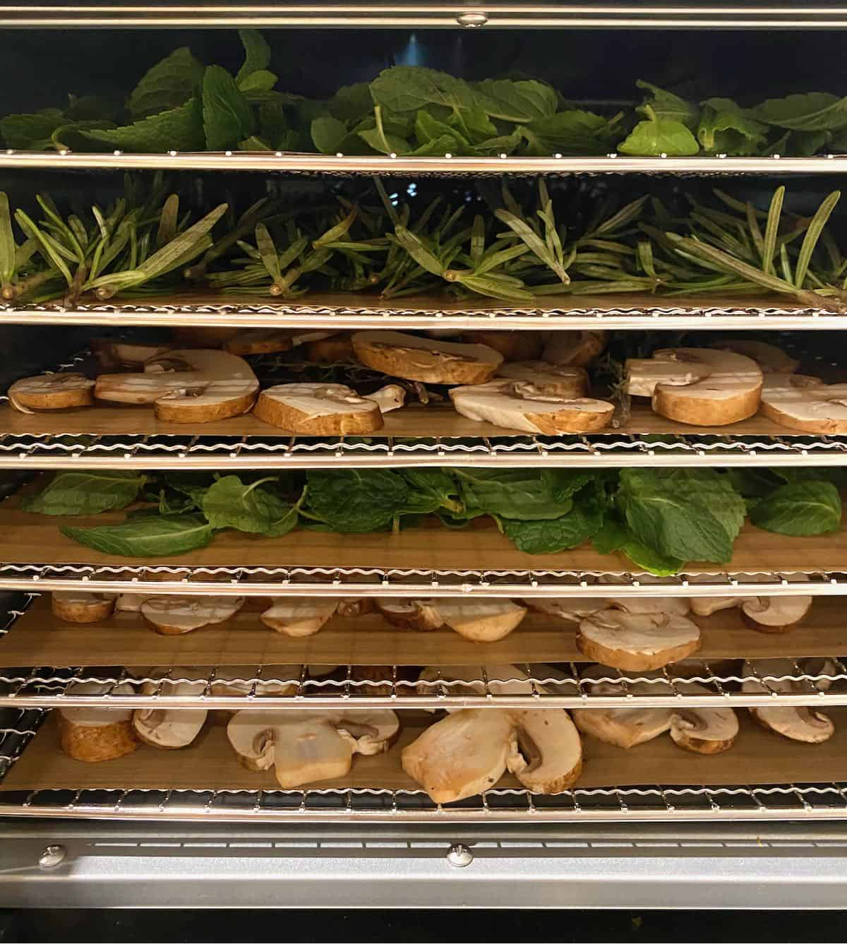 Herbs and mushroom slices in a dehydrator