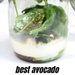 Making avocado smoothie