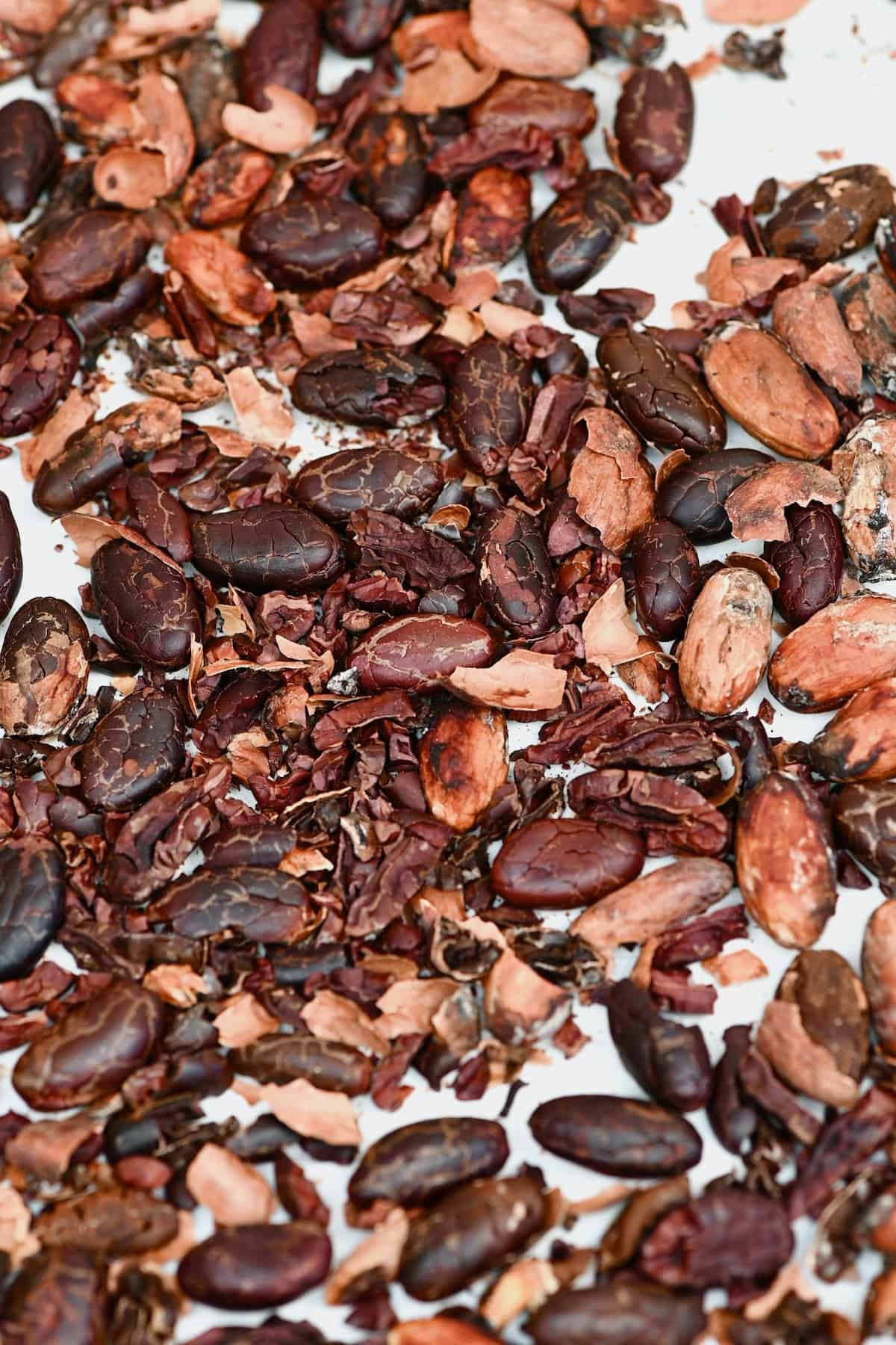 Fermented cacao beans