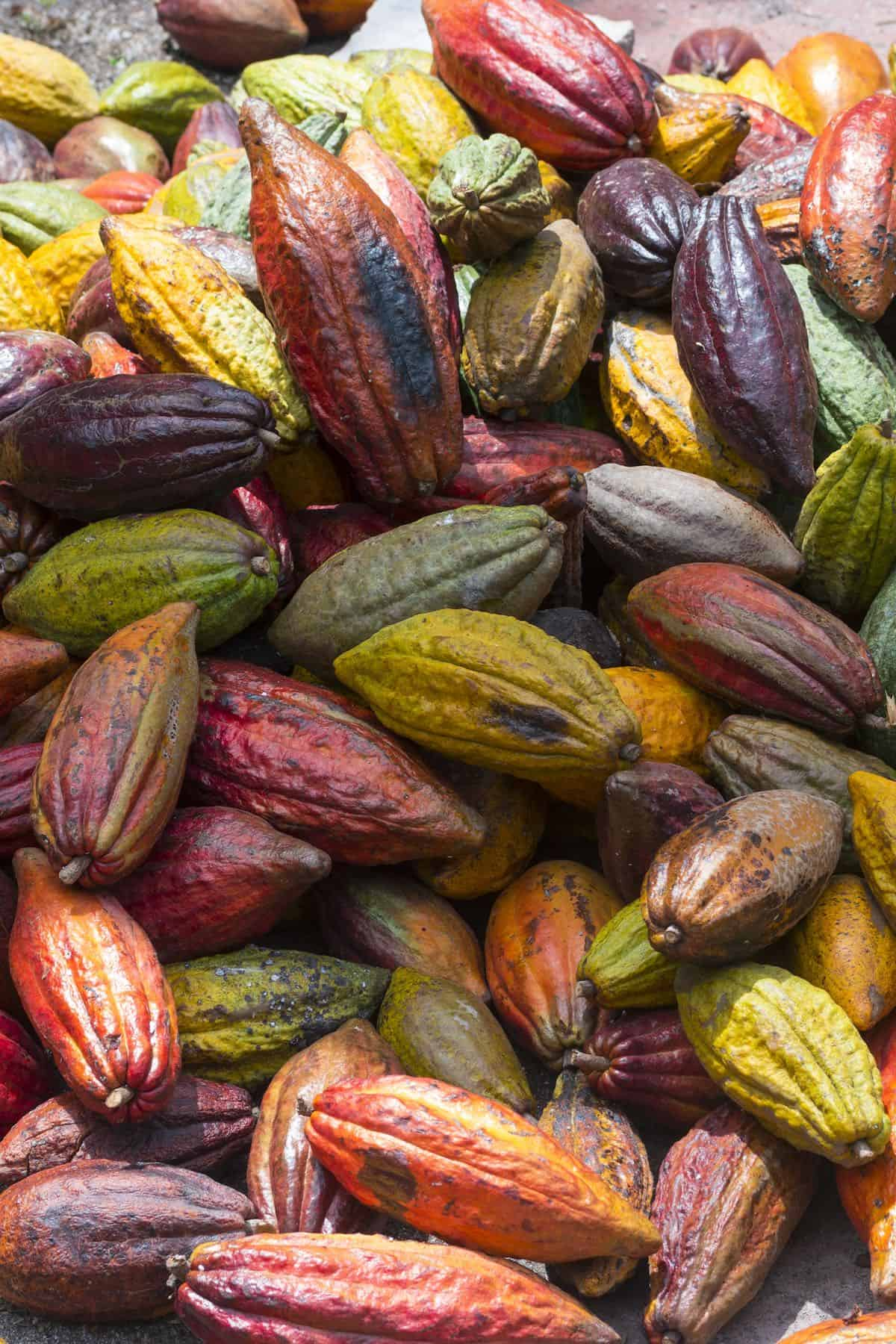 Mixed Colorful Cocoa Pods
