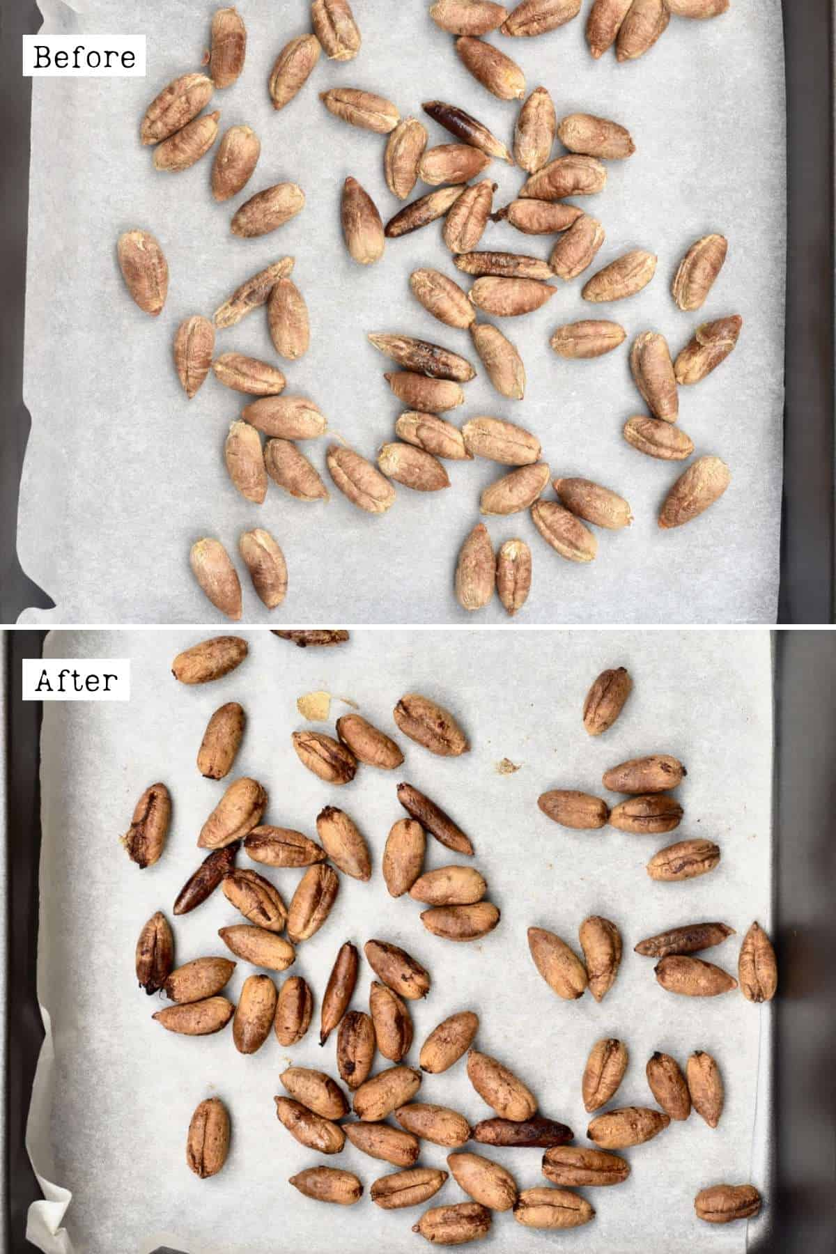 Before and after toasting date seeds