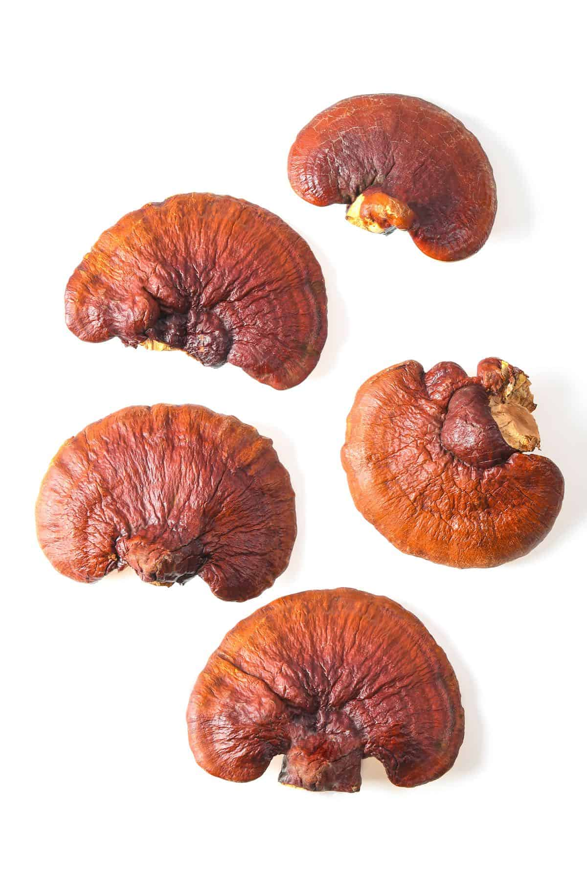 Reishi mushroom on a white background
