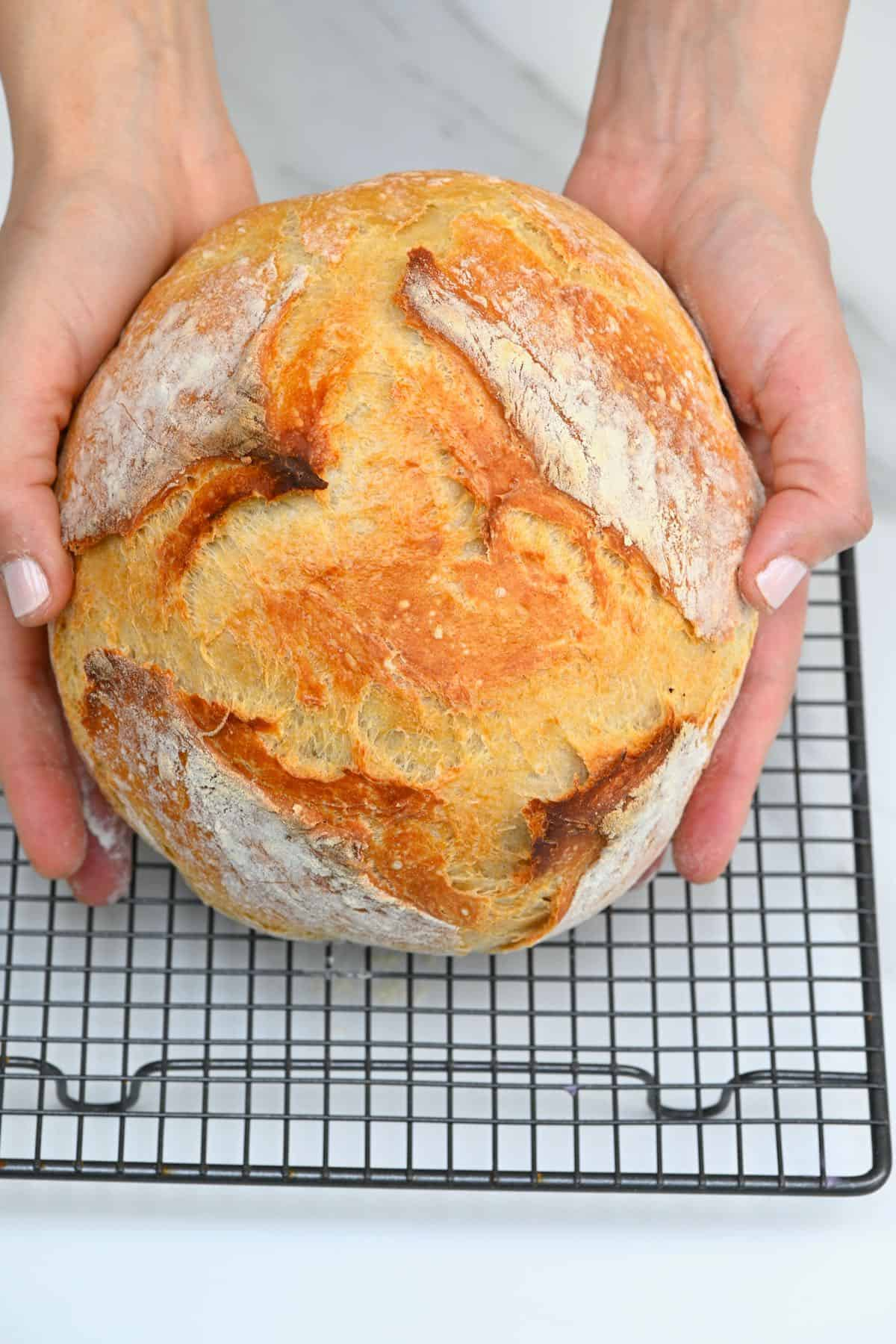 Two hands holding a no-knead bread over a cooling rack