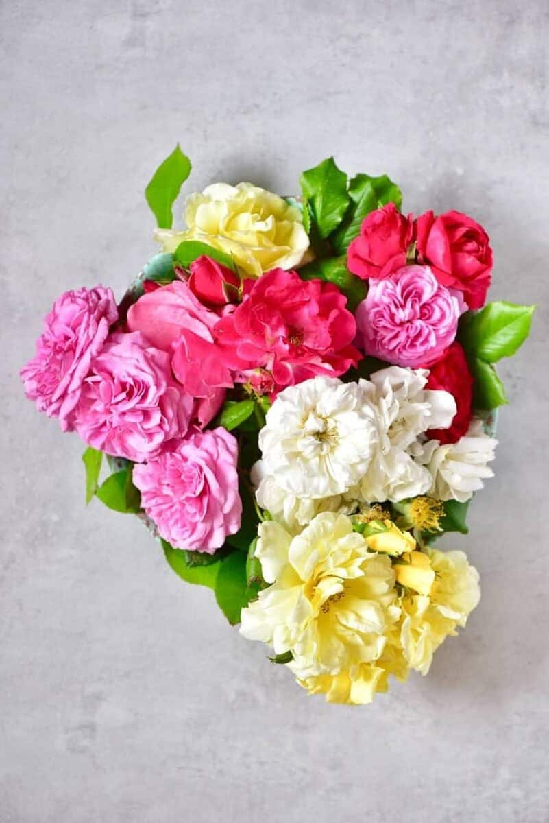 Pink white and yellow bunch of rose flowers